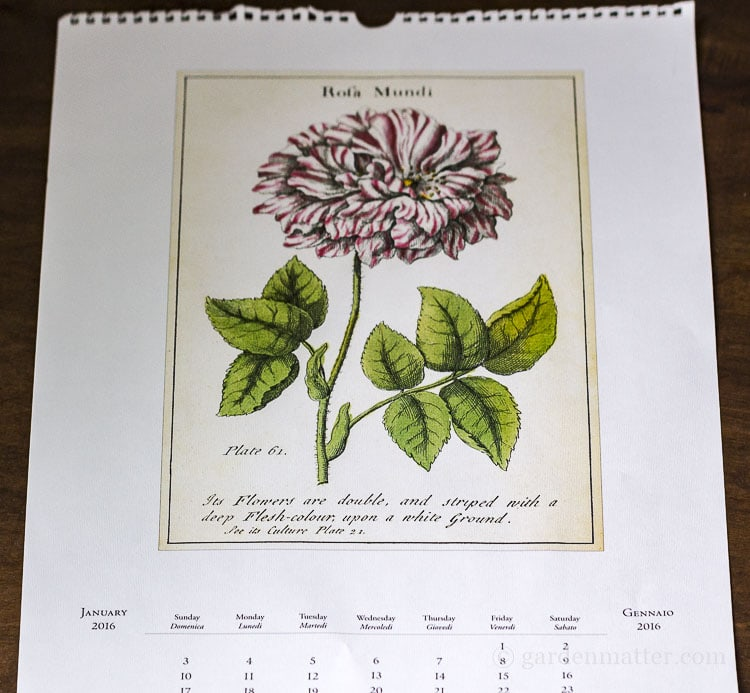 Botanical print from a calendar makes great wall art.