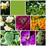 Learn about the plant of the year and color of the year from the top associations.