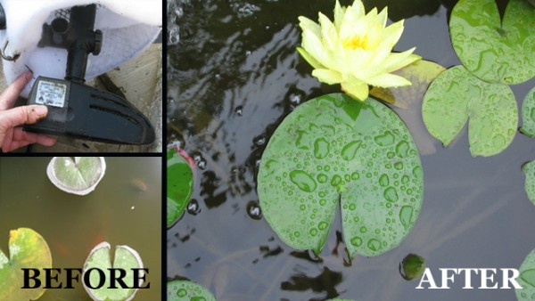 An easy trick for a sparkling clean pond.