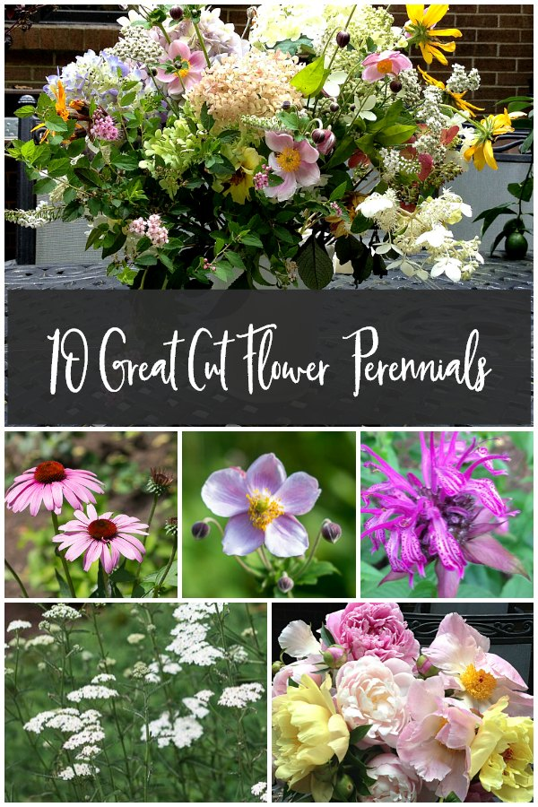 collage of cut flower perennials
