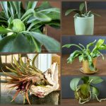 Growing Epiphytes in Your Home
