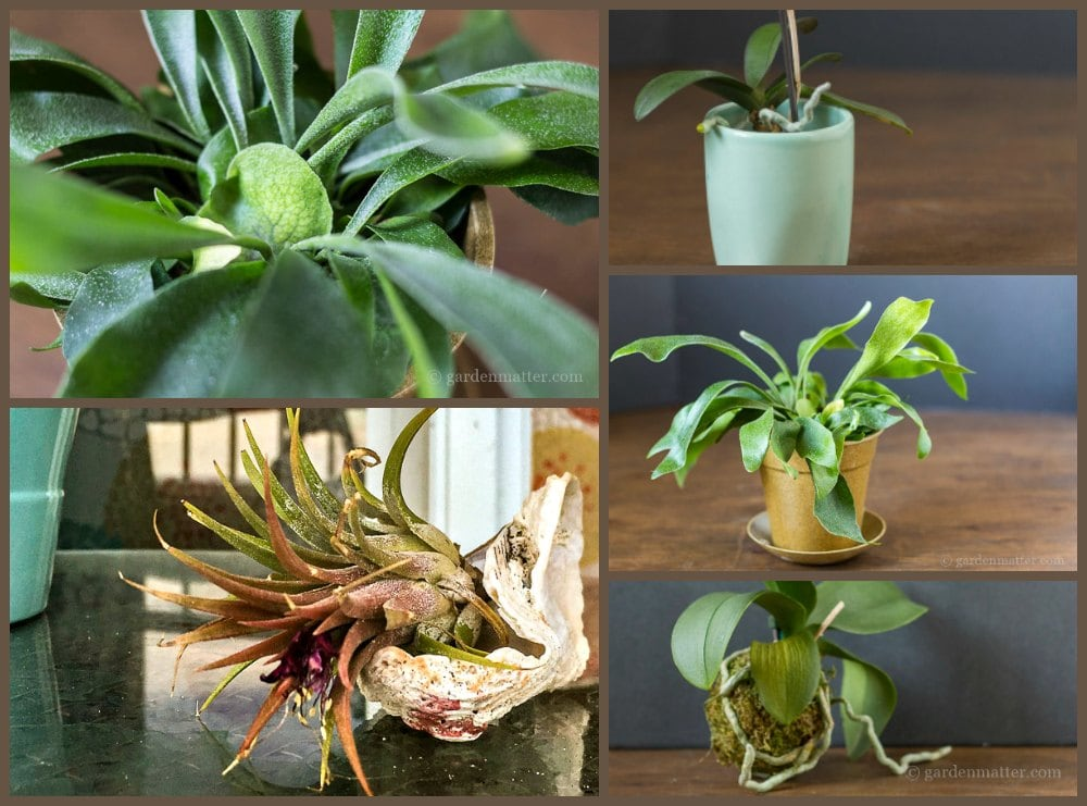 A group of air plants in a gallery image