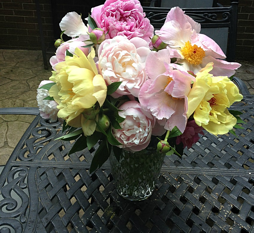 Vase full of peony flowers. Peonies are easy to grow perennials that work great in arrangements.