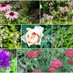 Ten easy to grow cut flower perennials for the garden.