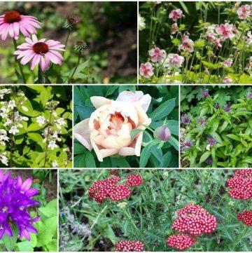 Ten easy to grow cut flower perennials for the garden.