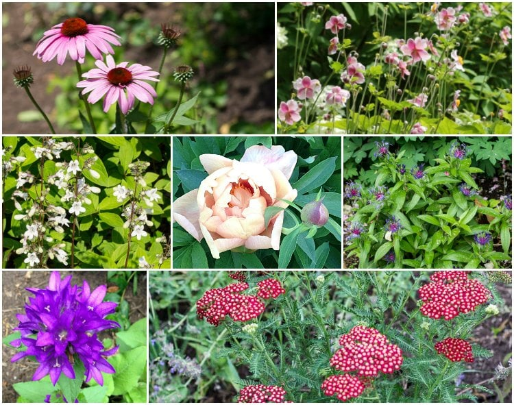 Ten easy to grow cut flower garden perennials