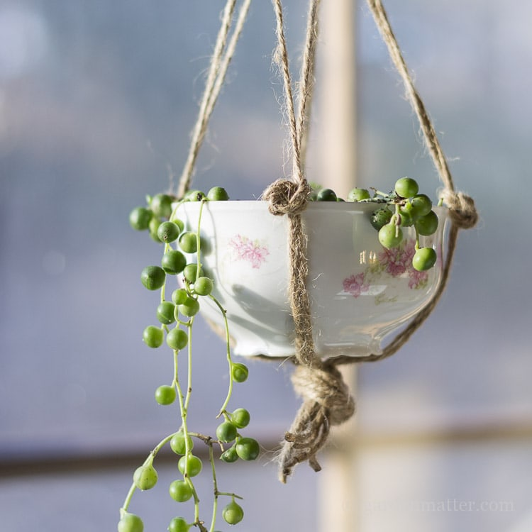 How to upcycle a teacup into a hanging planter.