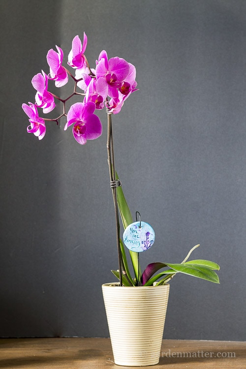 Garden Charm in Orchid Pot