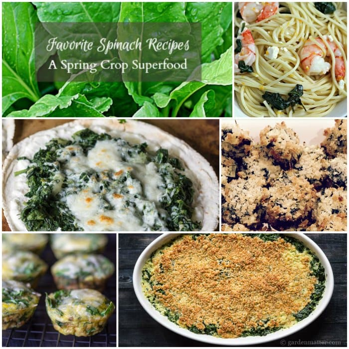 Learn a few great spinach recipes from your spring crops.
