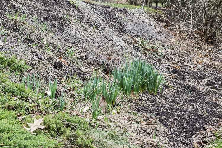 Tips for preparing your spring garden
