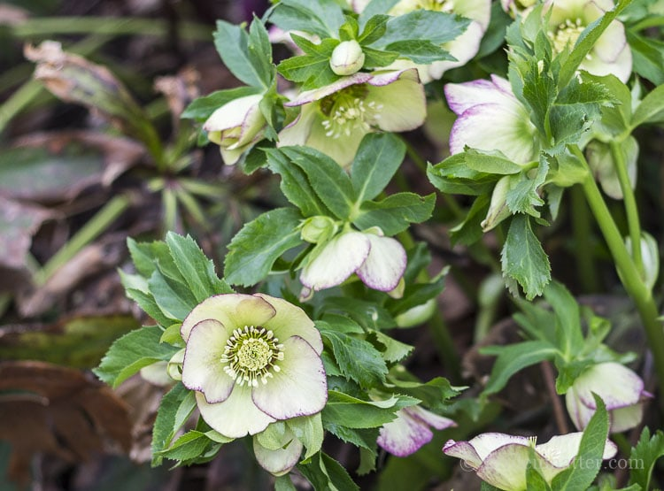 Simple tips for preparing your spring garden.