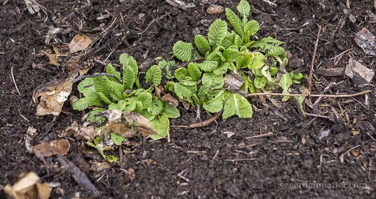 Ways to prepare your spring garden.