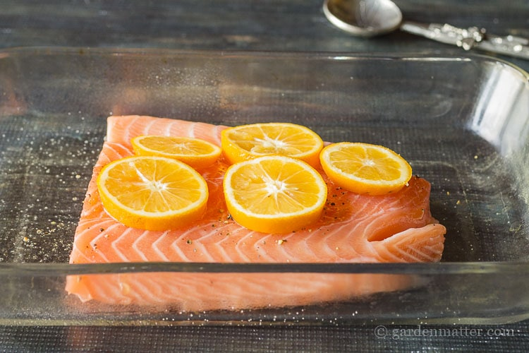 Baked salmon with sliced of Meyer lemon.