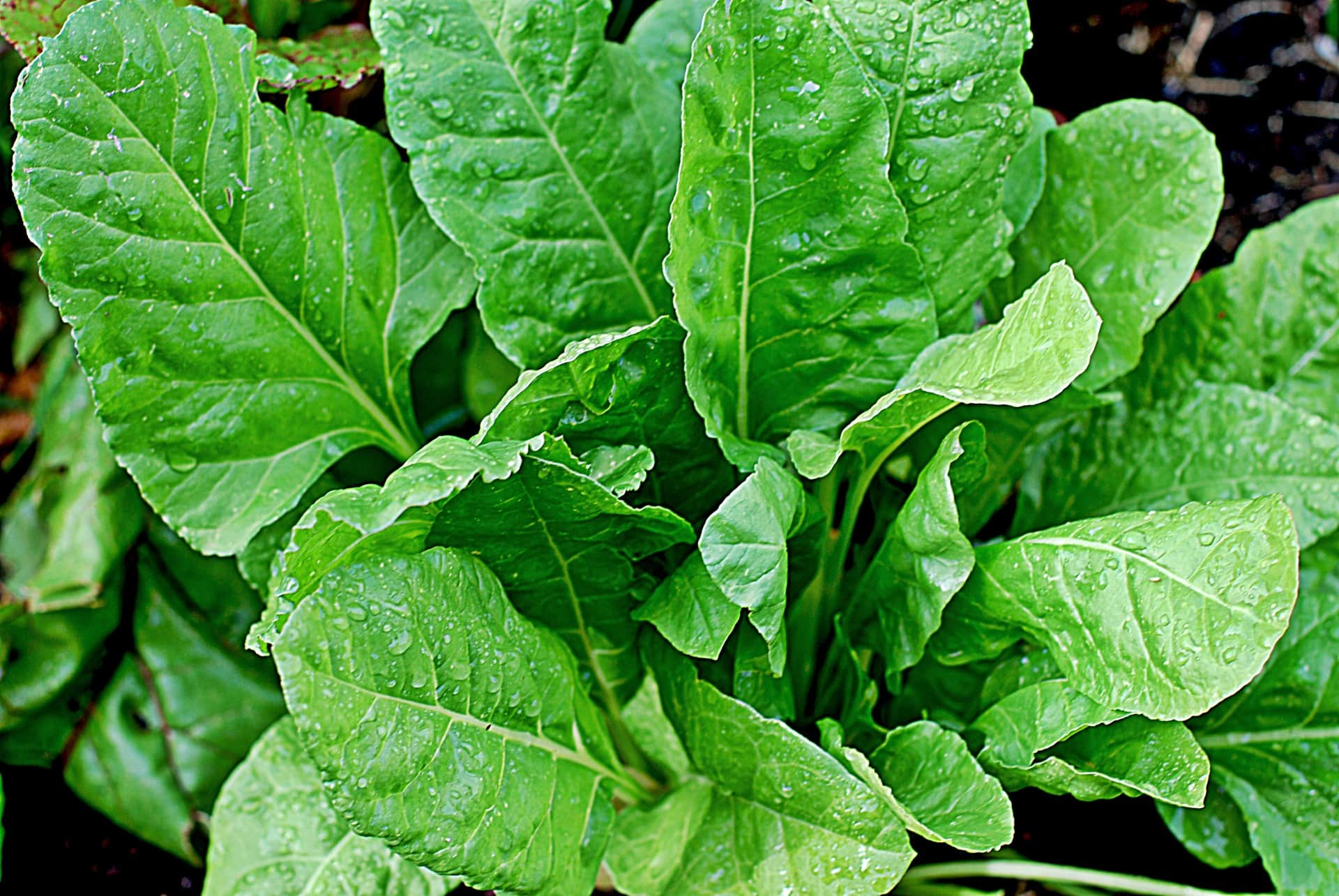 Enjoy the all the amazing health benefits of this super food spring crop with five favorite spinach recipes you can whip up in no time.