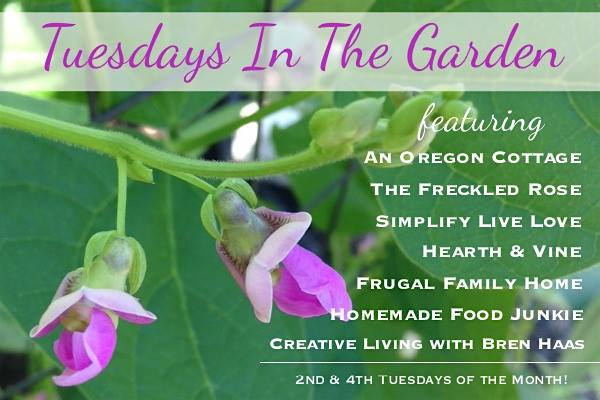 Tuesdays in the garden bloggers bimothly gardening posts