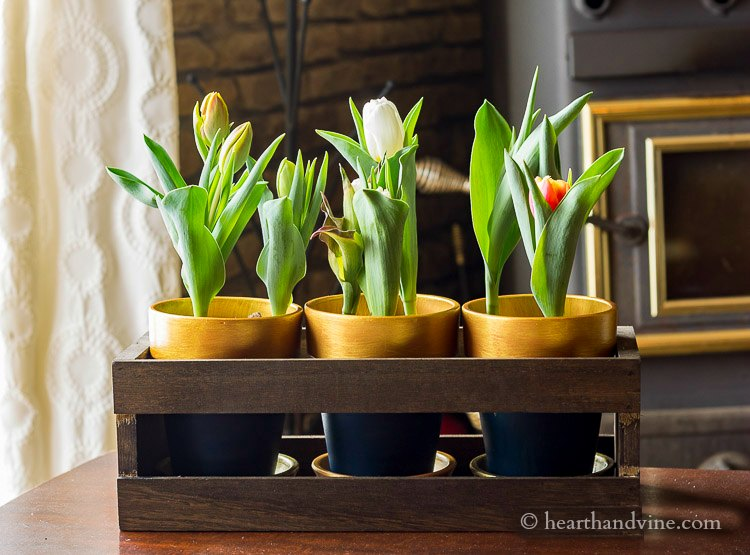 Navy and gold pots with tulips