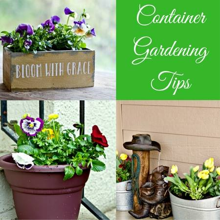 Food Junkie Container Gardening Tips