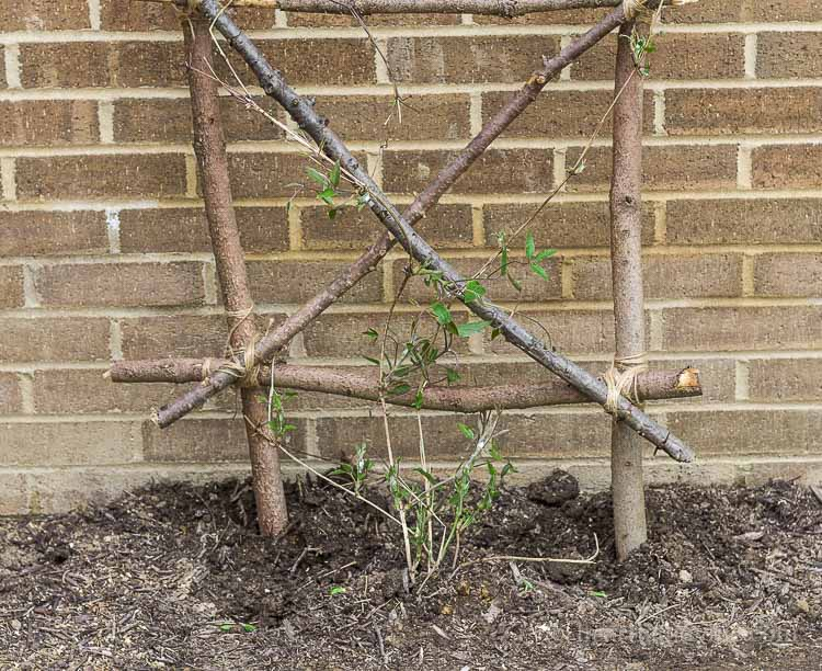 Choose a vine plant to grow at the base.