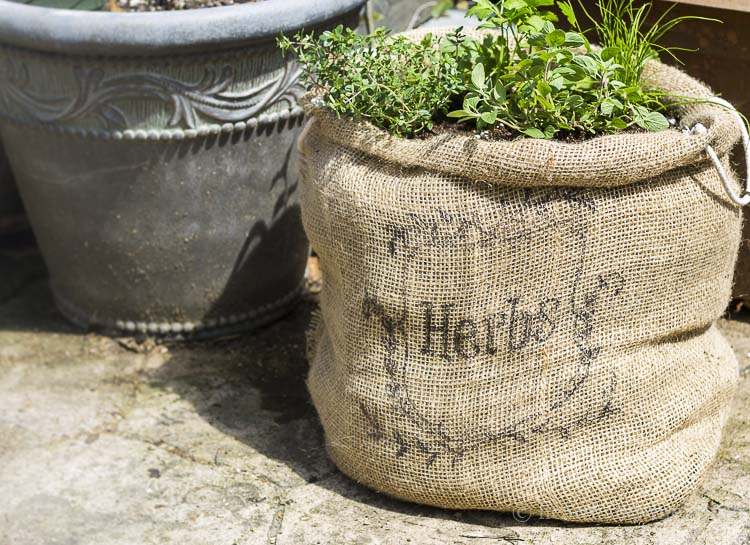 Herb garden in burlap sack on patio.
