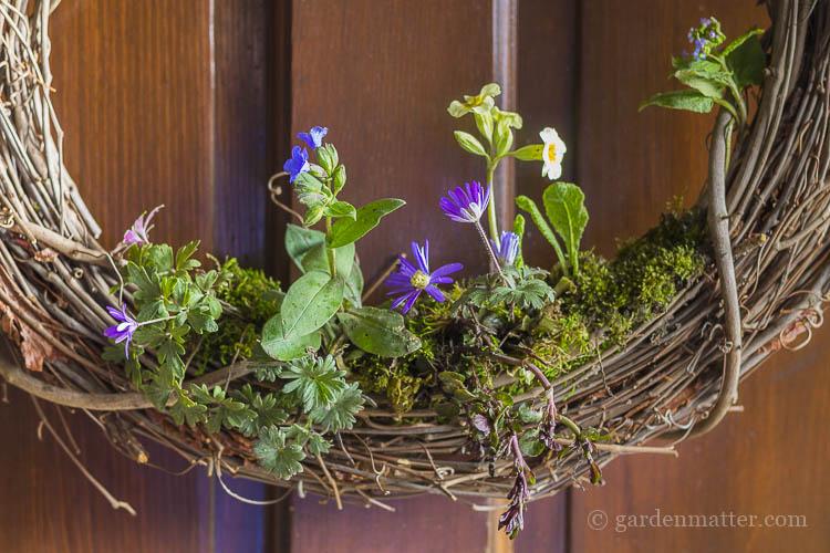Garden plants in living wreath.