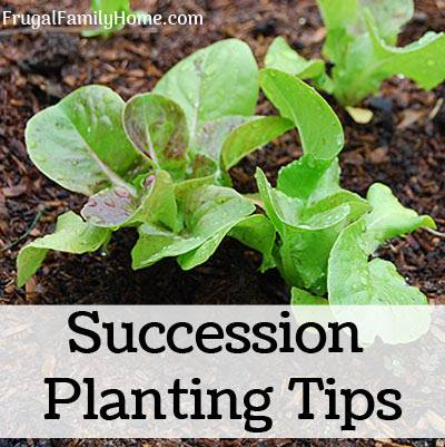 Succession Planting TIps
