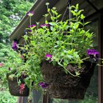 5 Simple Tips To Create Beautiful Hanging Flower Containers