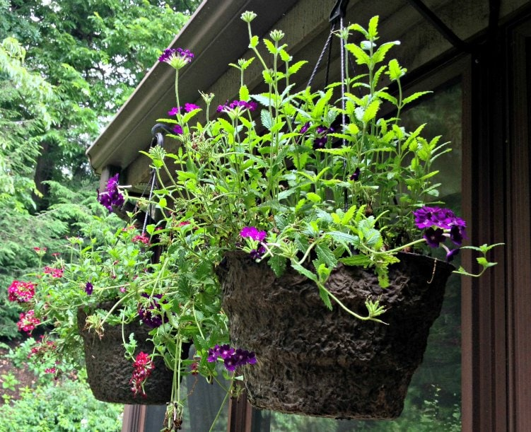 Tips for creating beautiful hanging flower containers.