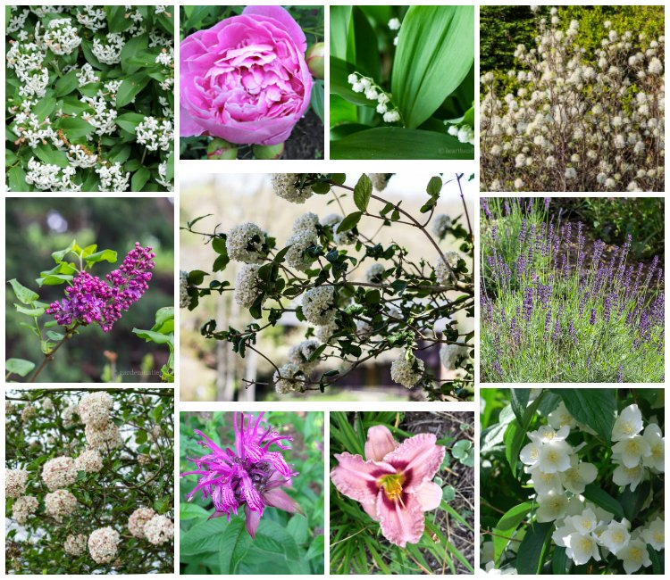 10 fragrant plants for the garden in a gallery