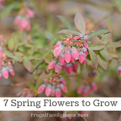 Spring flowers from frugal family home