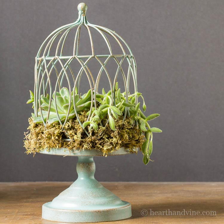 Bird Cage Succulent Planter Tutorial