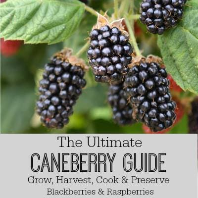 Ultimate Caneberry guide.