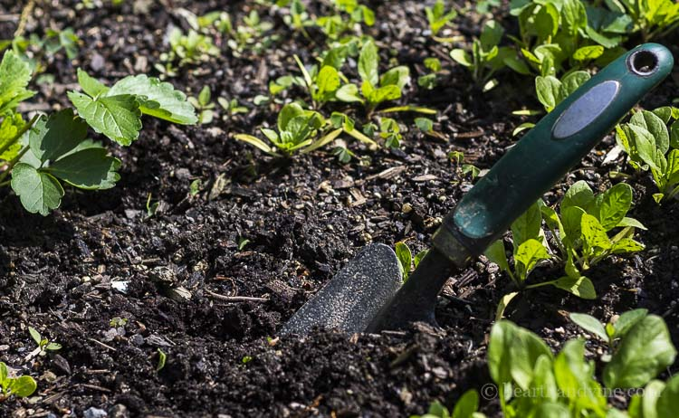 Way gardening can improve your mental health.