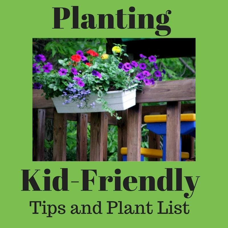 Kid friendly plants
