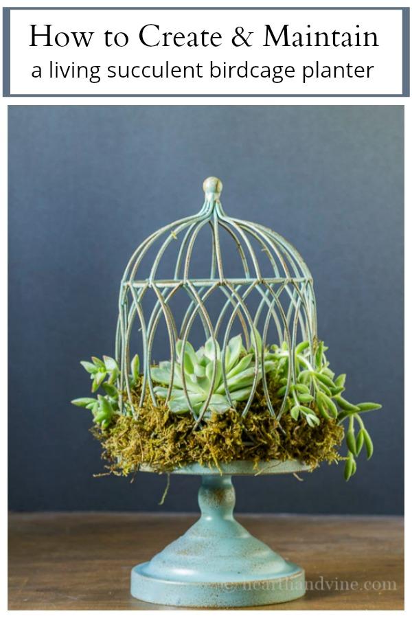 living succulent birdcage planter