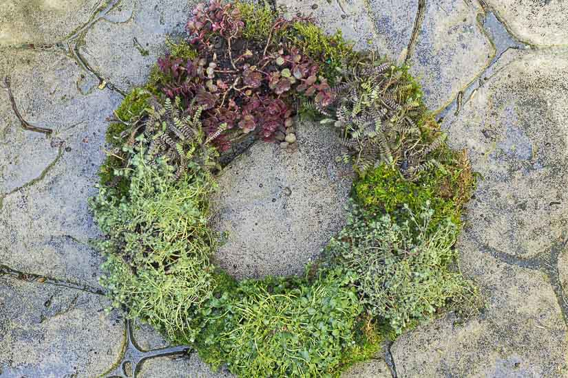Ground cover living wreath.