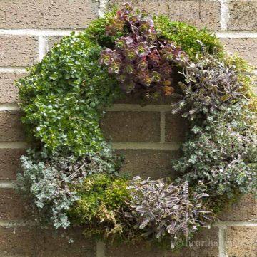 Living wreath tutorial.