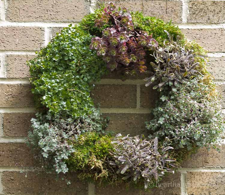 Living wreath tutorial.