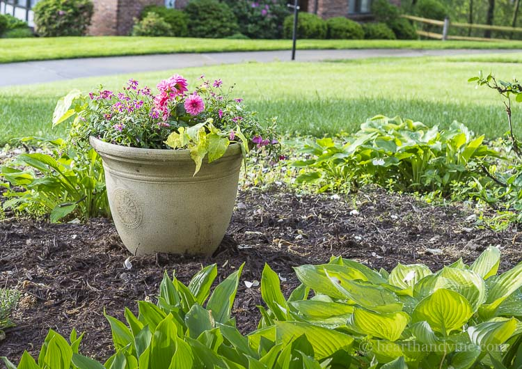 Pink and green planter to replace maple tree.
