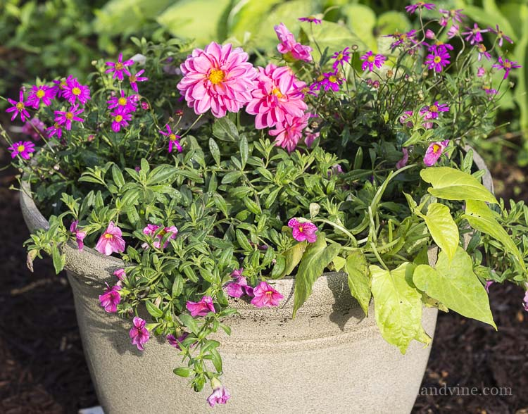 Close up view of pink and green planter.