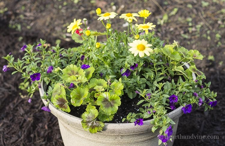 Close up view of yellow and purple planter.