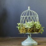 How to Make a Succulent Birdcage Planter