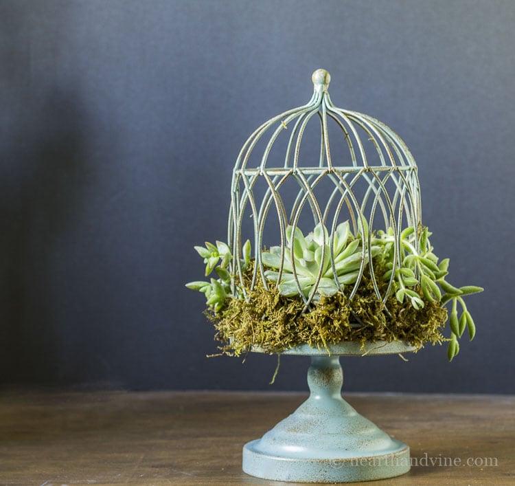 Succulent birdcage planter tutorial