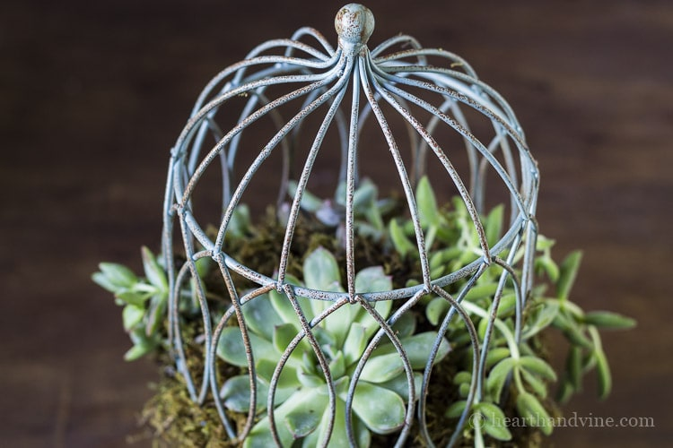 Top view of succulent birdcage planter