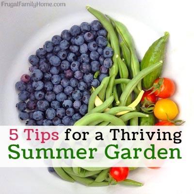5 Tips for a Thriving Summer Garden