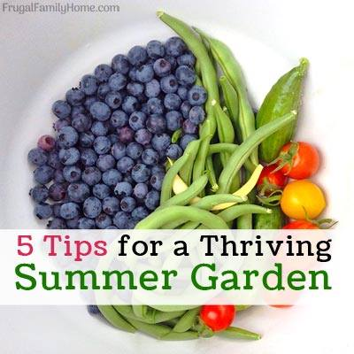 5 Tips for a Thriving Summer Garden