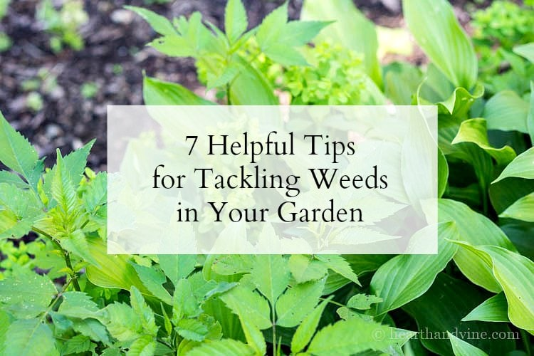 7 tips for tackling weeds in your garden.