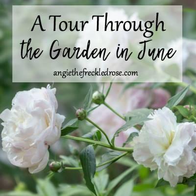A tour through the garden in June.