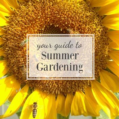Guide to summer gardening