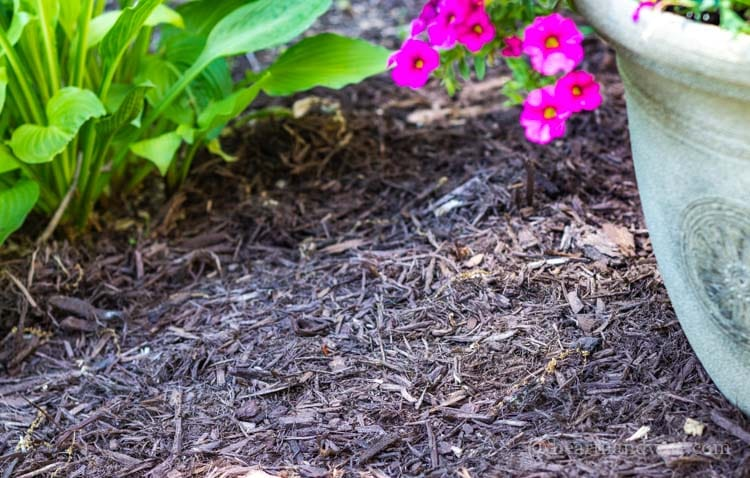 Mulching helps smother weeds and keep soil cool.
