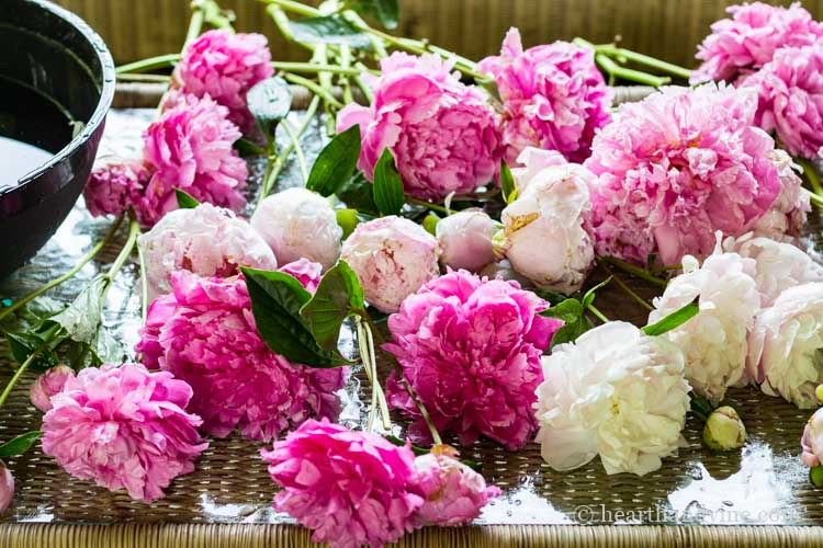 Washed peonies on table.